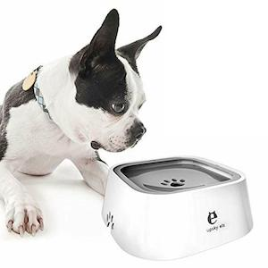 Best Dog Bowls For Your Pet
