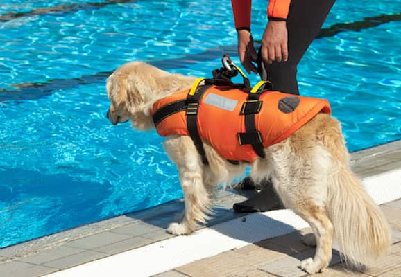 How To Get Your Dog In The Swimming Pool?