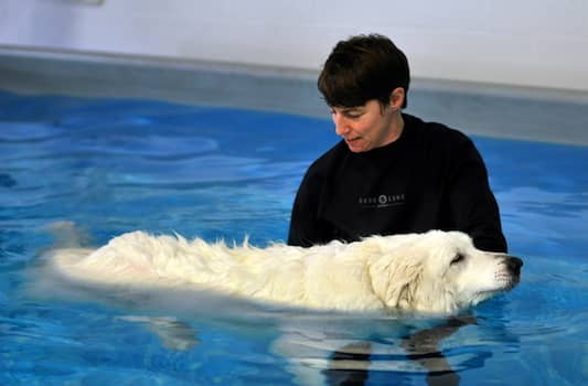 How to train your dog to swim in a pool?