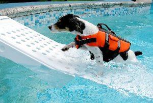 Post dog swimming training