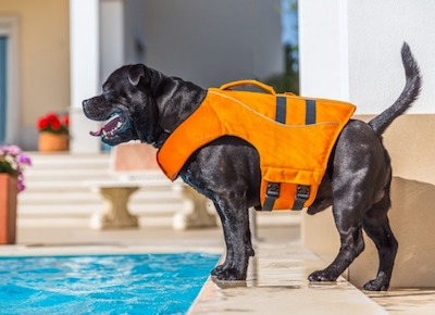 Safety precautions for dog training
