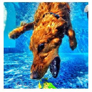 How to Train Your Dog to Swim Underwater?