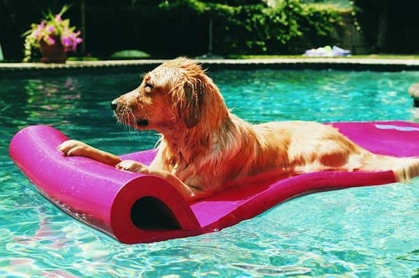 Is chlorine safe for dogs?