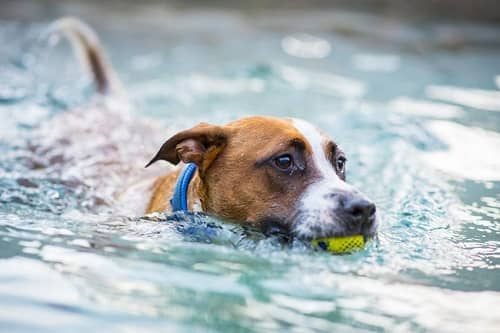 Should Dogs Be Bathed After Swimming In The Pool
