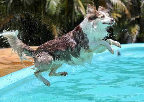 Tips For Training A Dog To Swim