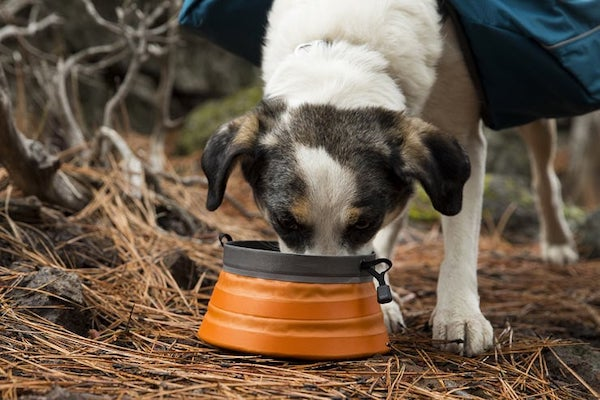 Featured Image Collapsible Dog Bowls