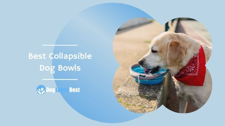Best Collapsible Dog Bowls Featured Image