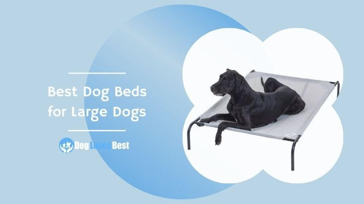 Best Dog Beds for Large Dogs Featured Image