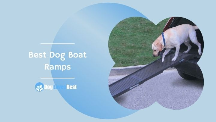 Best Dog Boat Ramps Featured Image