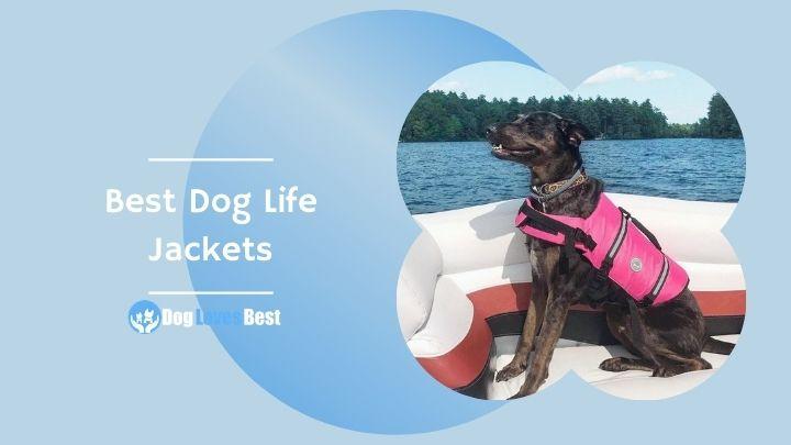 Best Dog Life Jackets Featured Image