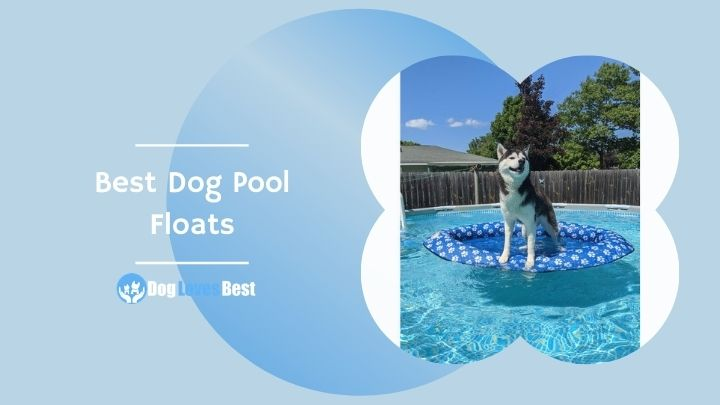 Best Dog Pool Floats Featured Image