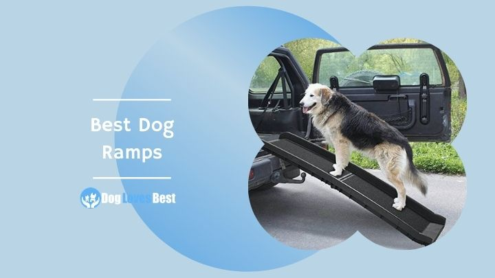 Best Dog Ramps Featured Image