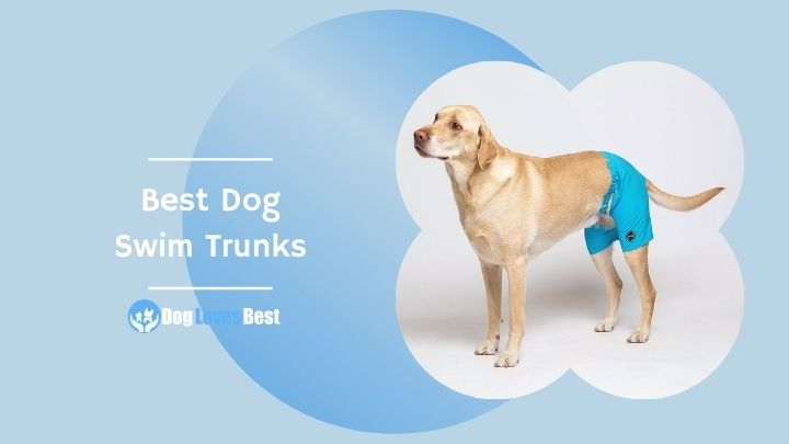 Best Dog Swim Trunks Featured Image