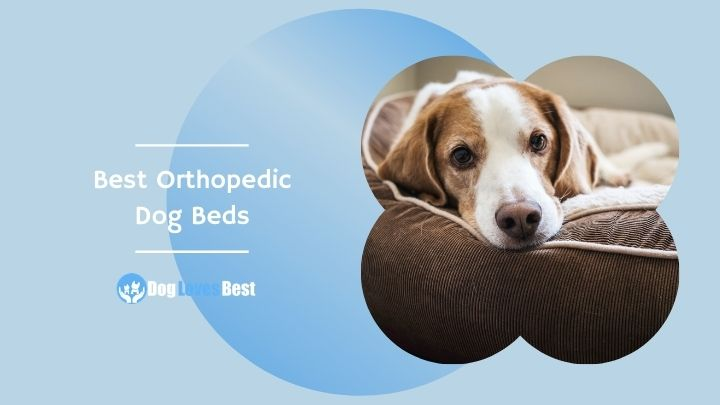 Best Orthopedic Dog Beds Featured Image