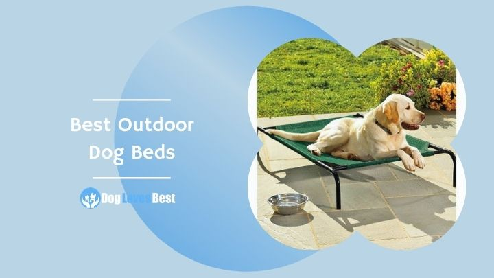 Best Outdoor Dog Beds Featured Image