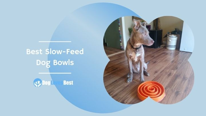 Best Slow-Feed Dog Bowls Featured Image