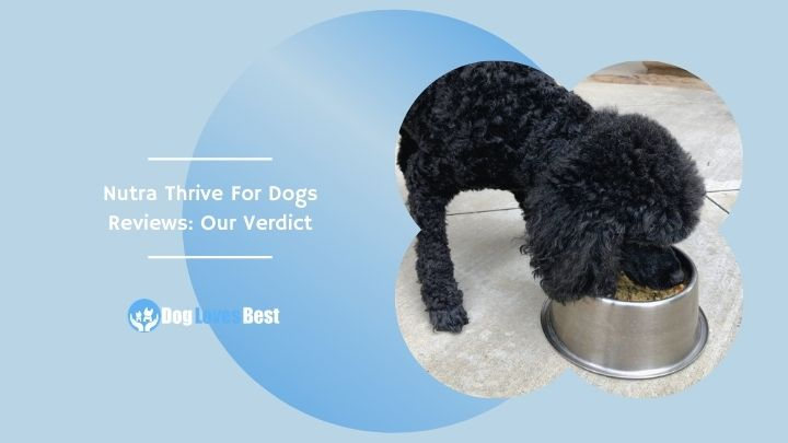 Nutra Thrive For Dogs Reviews: Our Verdict Featured Image