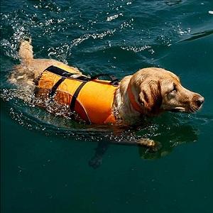 A-MORE Dog Life Jackets Dog Saver Life Jacket
