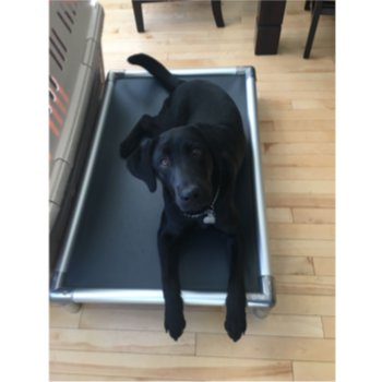 Best Dog Beds Made In The USA