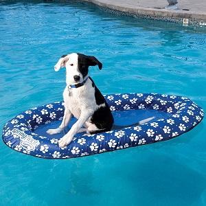 Best Dog Pool Floats