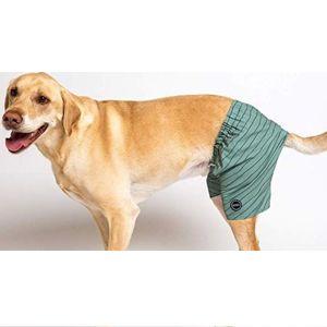 Best Dog Swim Trunks
