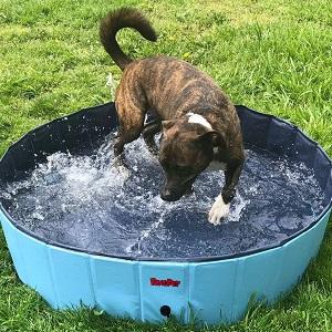 BINGPET Large Dog Swimming Pool Pet