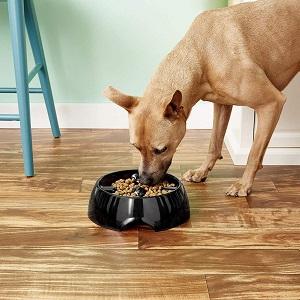 Dogit Go Slow Anti-Gulping Dog Dish