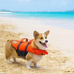 Outward Hound Granby Splash Life Jacket for Dogs