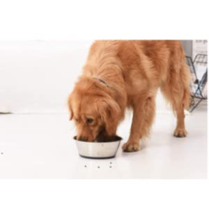 Peggy 11 Stainless Steel Deep Dog Bowl