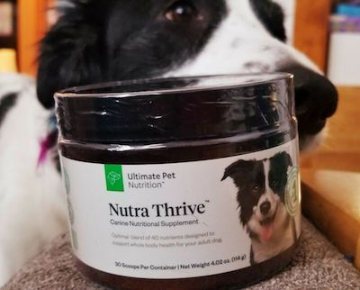 Should I Buy Nutra Thrive Canine Supplement For My Dog