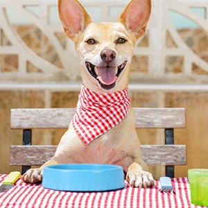 XZQTIVE Slow Feeder Bowl for Dog