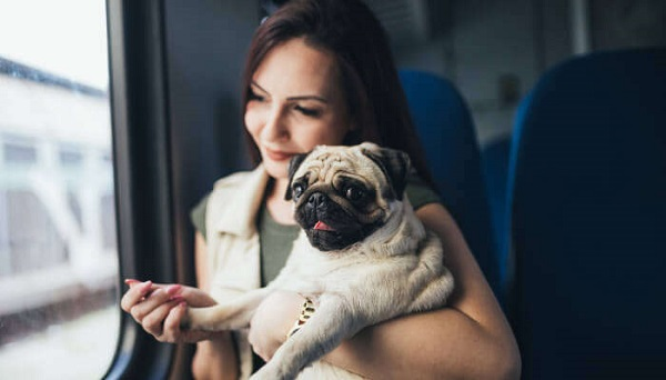 10 reasons you should start a dog blog
