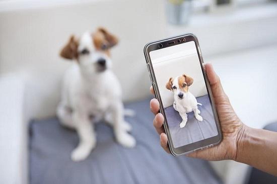 start a dog blog